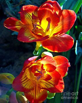 Anne Ferguson - Floral Glow