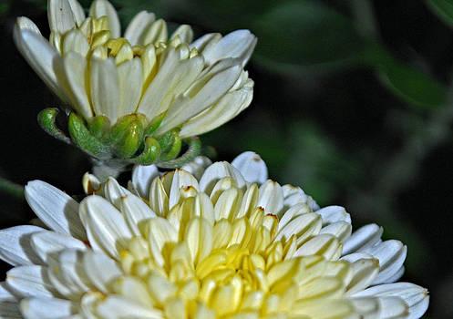 Michelle Cruz - Floral