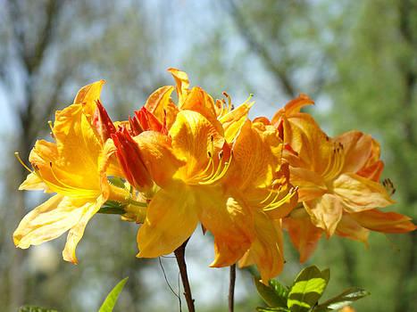 Baslee Troutman - Floral Nature art print Oragen Rhodies Flowers Baslee
