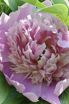 Christine Belt - Floral Spiral