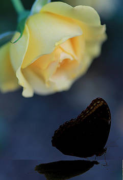 Floral Spotlight by Elizabeth Hart