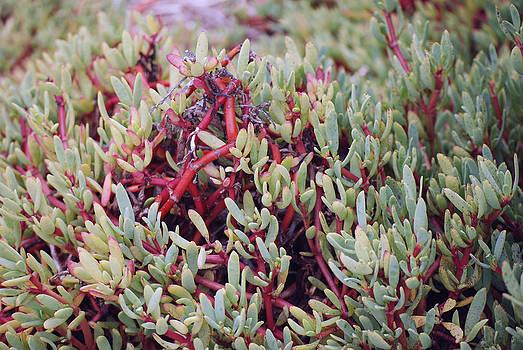 Harvey Barrison - Floreana Flora