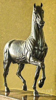 Gregory Dyer - Florence Italy - Anatomical Horse Statue - Medici Palace