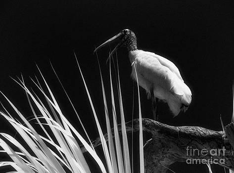 Jeff Holbrook - Florida Bird Squawking