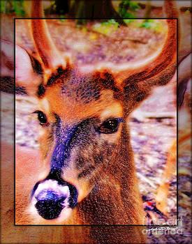 Florida Deer by John Breen