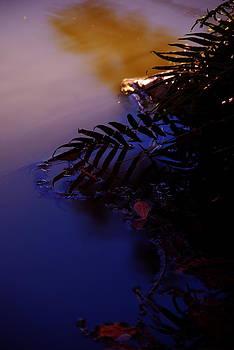 Ellie Perla - Florida Sunset 2