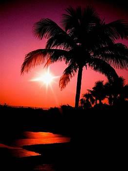 Floridian Morning by Megan Maloney