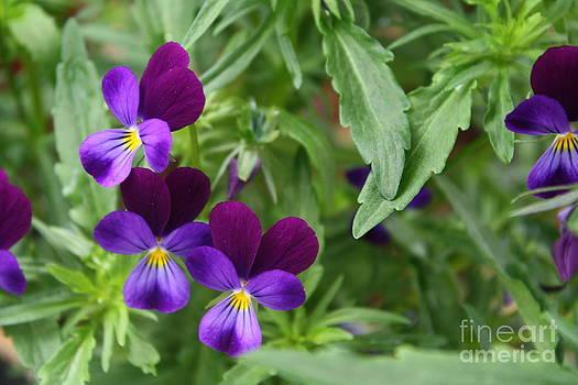 Flourising spring by Bozena Chmielewska