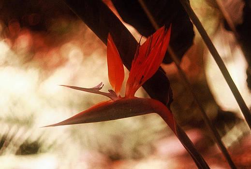 Flower 18 by Steven Loyd
