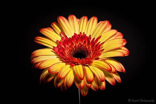 Flower by Alhaji Samura
