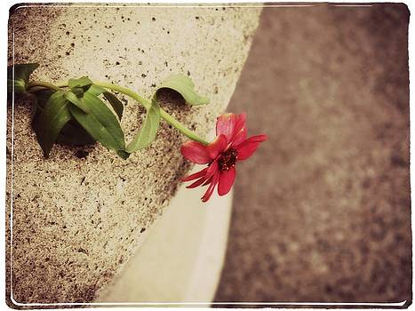 Flower and Cement by Cathie Tyler