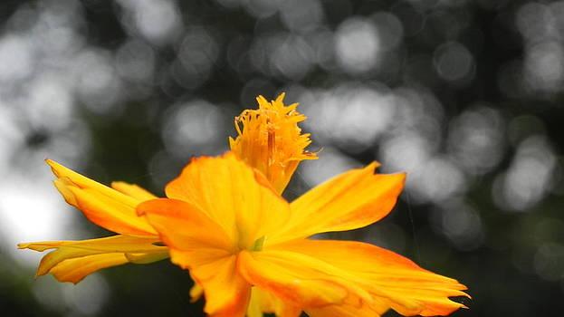 Flower by Arindam Raha