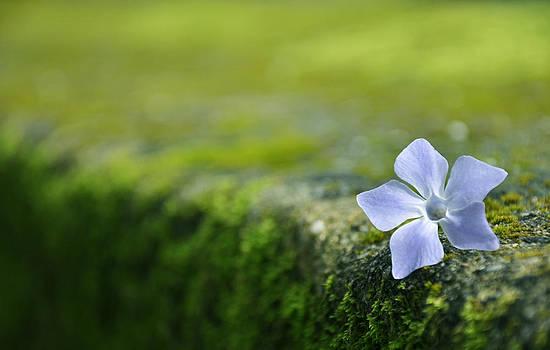 Flower by Armando Carlos Ferreira Palhau