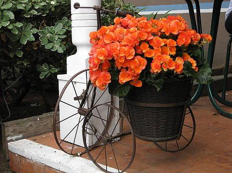 Flower Bike by Diana Poe