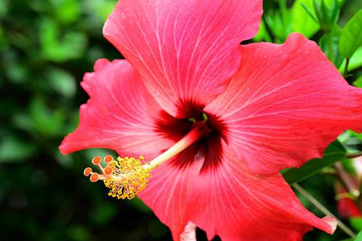 Bourbon  Street - Flower