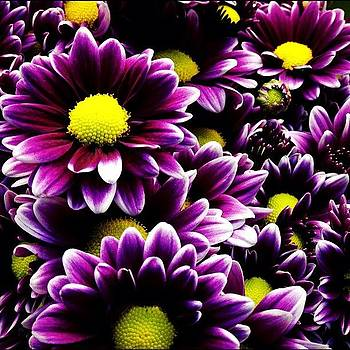 #flower #daisy #purple by Shari Malin