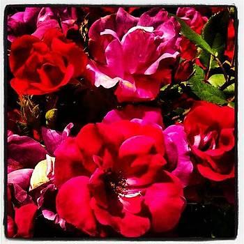#flower by David F