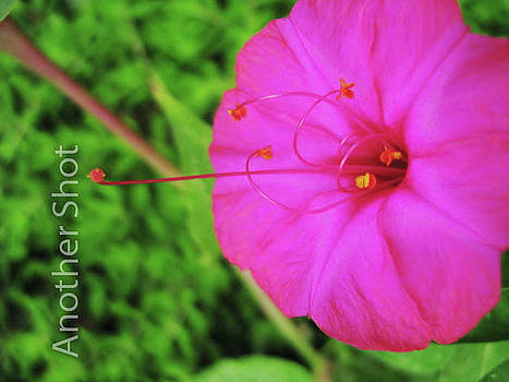 Flower by Dawn Elmore