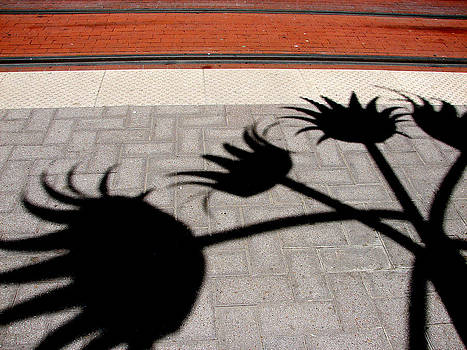 Flower Day by Ross Odom