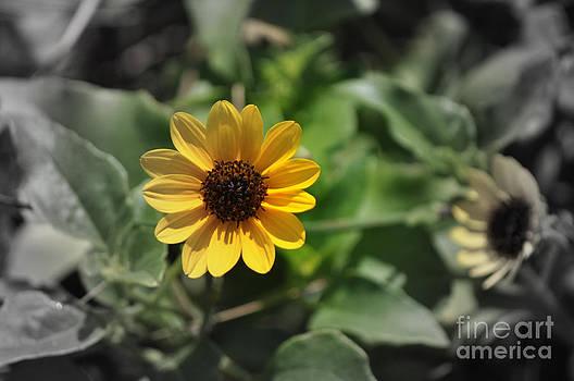 Flower by Denise Ellis