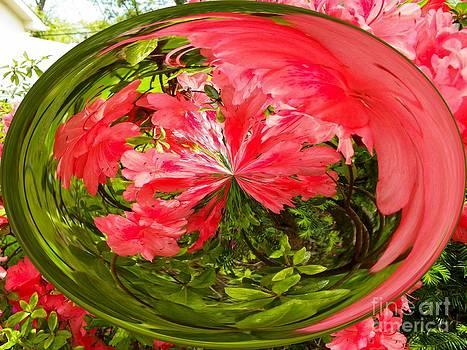 Flower Droplet by Laurence Oliver