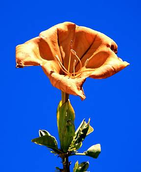 Flower Dying by Onorio Catenacci