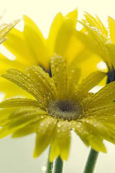Flower by Falko Follert