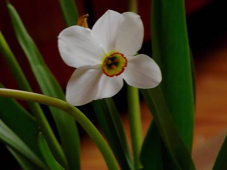 Flower by Furin Erika