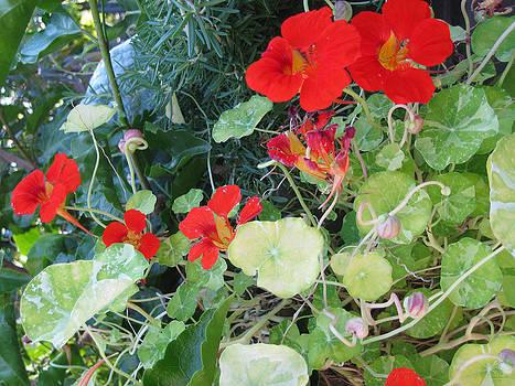 Flower Garden In September Bloom by Charles Dancik