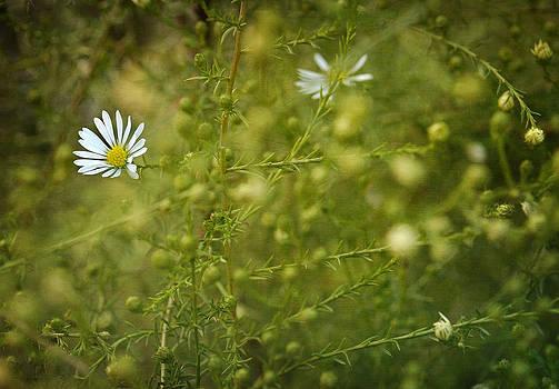 Zoran Buletic - Flower II
