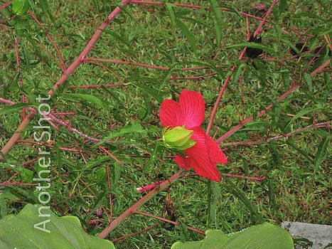 Flower III by Dawn Elmore