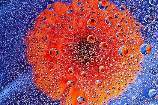 Flower in a  Bubble by Beverly Hanson