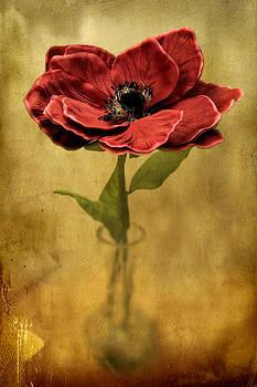 Zoran Buletic - Flower In A Vase
