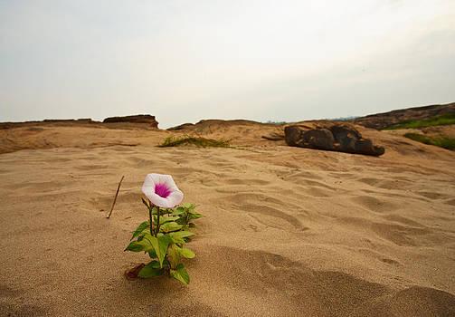Flower in desert by Panya Jampatong