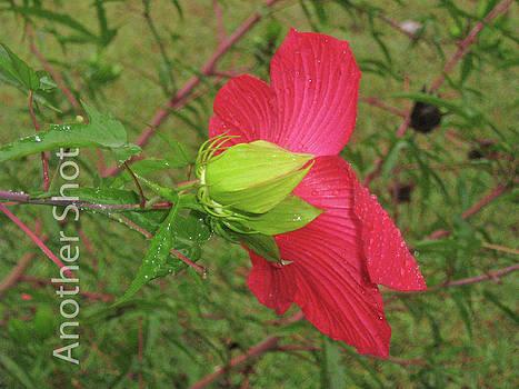 Flower IV by Dawn Elmore