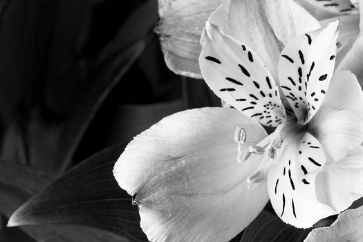 Jason Smith - Flower