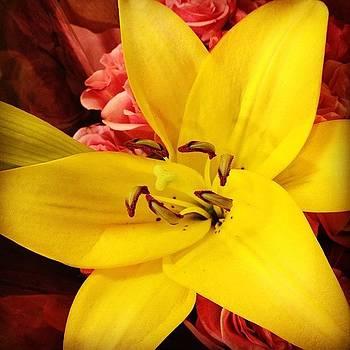 #flower #lily by Shari Malin