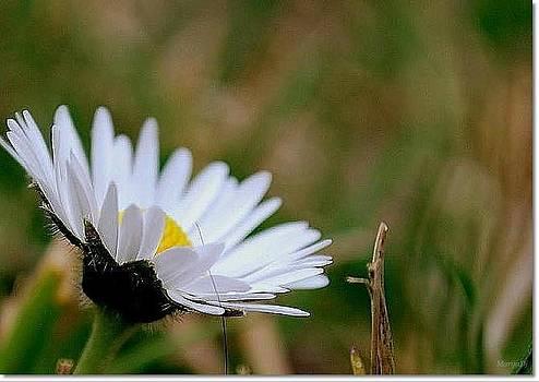 Flower by Marija Djedovic