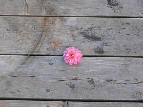 Flower on Boardwalk by Jeff Moose