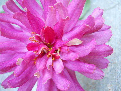 Flower Pink by Cassidy Nordyke