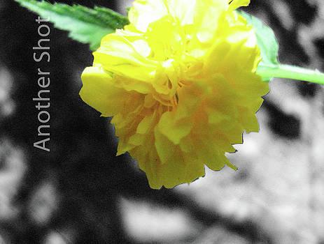 Flower Power by Dawn Elmore