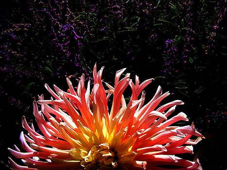 Flower power by Joe Luchok