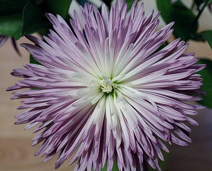 Flower Power by Rita Tortorelli