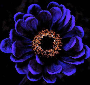 Flower Power by Stephen Chard