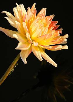 Donna Corless - Flower Reflected on Black vert