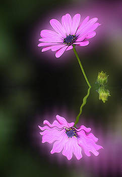 Flower reflexion by Jesus Nicolas Castanon
