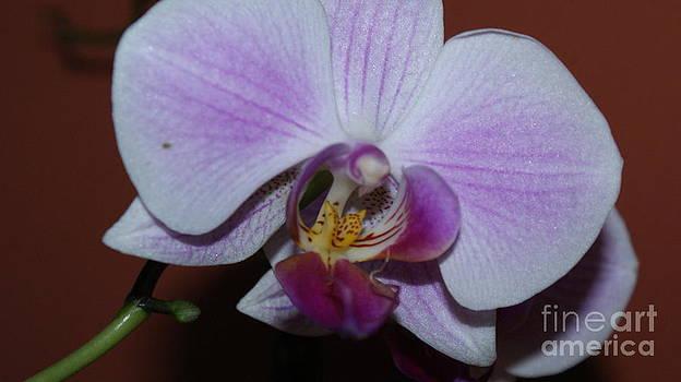 Flower by Robert Mccarthy
