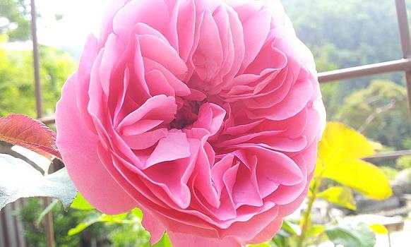 Flower by Sangyoun Han
