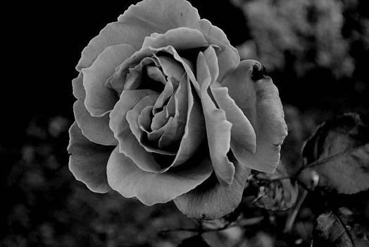 Flower sheek by Sam Cockram