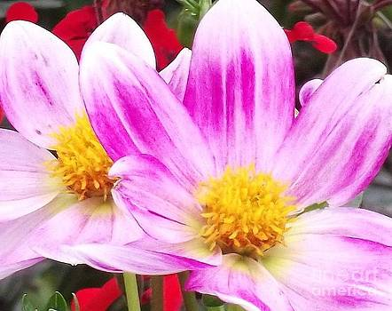 Shawna Gibson - Flower